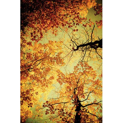 Golden Photographic Print on Wrapped Canvas