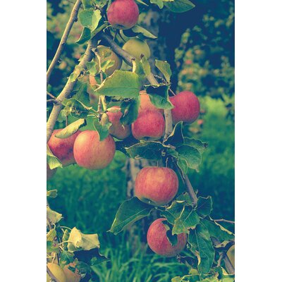 Apple Harvest Photographic Print on Wrapped Canvas