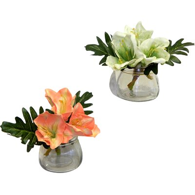 2 Piece Classic Amaryllis in Vase