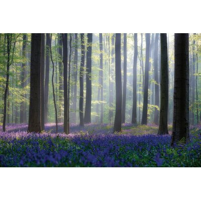 Bluebells Photographic Print on Wrapped Canvas