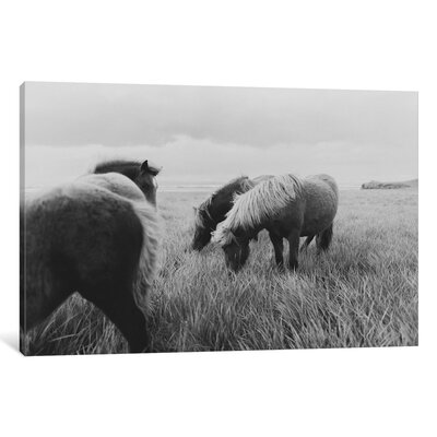 Alcott Hill Horses on Iceland II Photographic Print on Wrapped Canvas