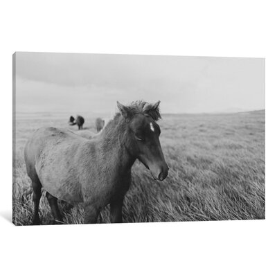 Alcott Hill Horses on Iceland I Photographic Print on Wrapped Canvas