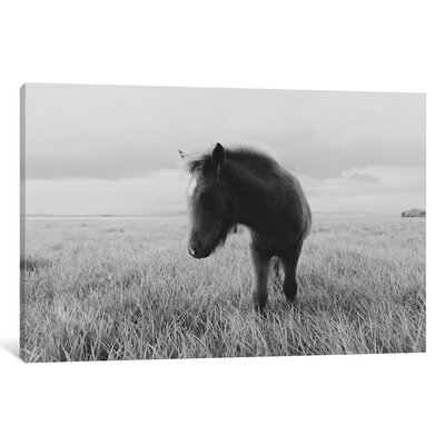 Alcott Hill Horses on Iceland III Photographic Print on Wrapped Canvas