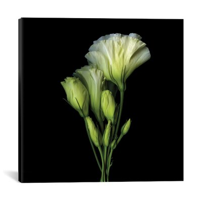 A Bundle of Joy and Beauty Photographic Print on Wrapped Canvas