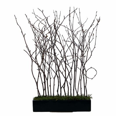 Natural Birch Branches in Rectangle Pot