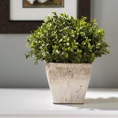 Desk Top Plant in Planter