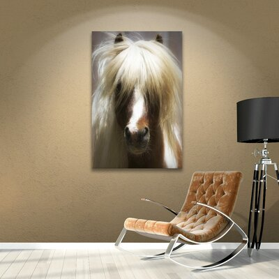 Shetland Pony Photographic Print on Wrapped Canvas