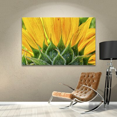 Sunflower Fan Photographic Print on Wrapped Canvas