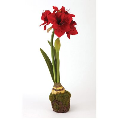 Alcott Hill Amaryllis Dropin Floral Arrangement in Pot Color: Red