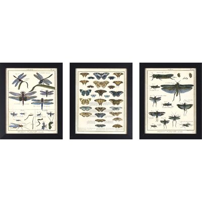 Alcott Hill Butterfly and Insect Study 3 Piece Framed Graphic Art Set