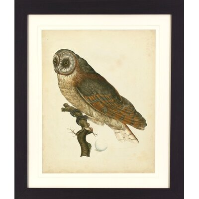 Alcott Hill Antique Owl Framed Graphic Art