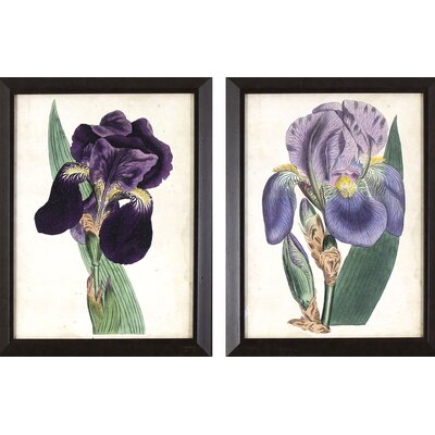 Alcott Hill Purple Irises 2 Piece Framed Graphic Art Set