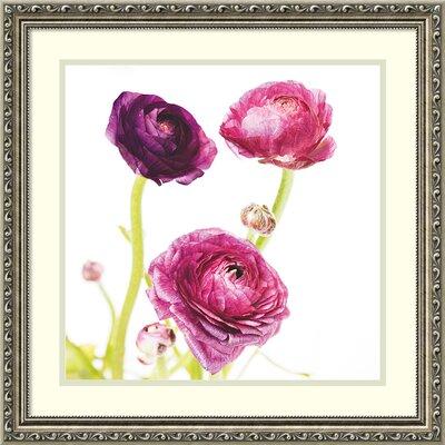 Spring Ranunculus I Framed Graphic Art