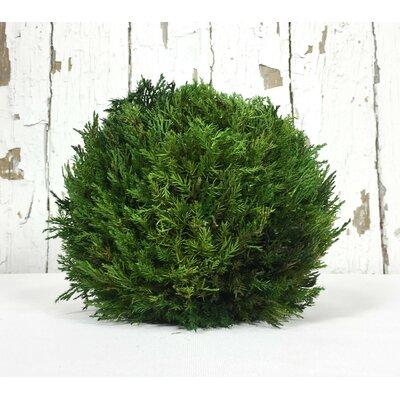 Cypress Ball