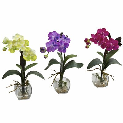 Mini Vanda Orchid Flowers
