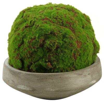 Ball Moss Topiary