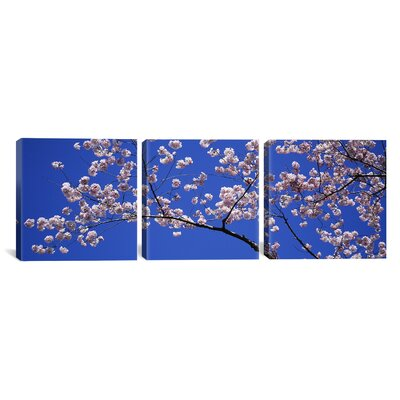 Cherry Blossoms Washington DC USA 3 Piece Photographic Print on Wrapped Canvas Set Size: 12