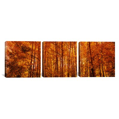Aspen Trees at Sunrise in Autumn Colorado, USA 3 Piece Photographic Print on Wrapped Canvas Set Size: 12
