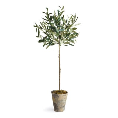Olive Tree in Round Ceramic Pot Size: 46