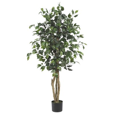 Parkes Silk Ficus Tree in Pot Size: 48