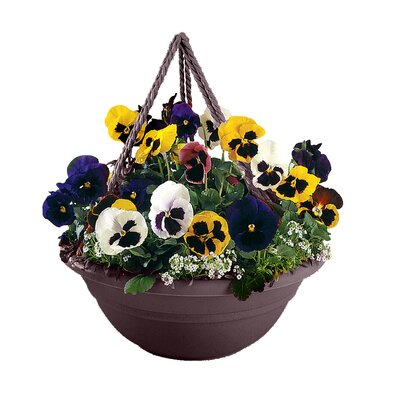 Coleshill Plastic Hanging Planter Color: Exotica