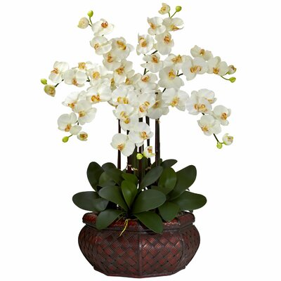 Faux Cream Phalaenopsis Orchid
