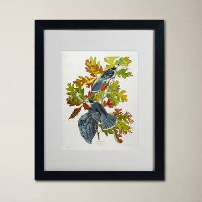 Canada Jay Matted Framed Graphic Art Size: 14 H x 11 W x 0.5 D