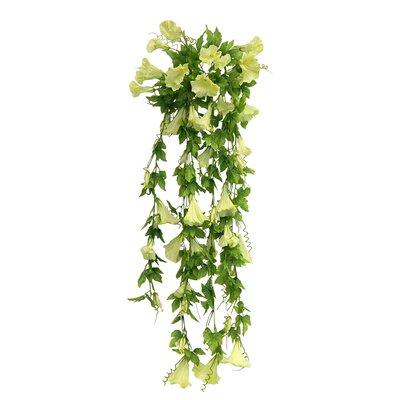 Morning Glory Vine Bush Hanging Plant CHLH4307 30304943