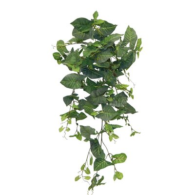 Sygonium Hanging Plant