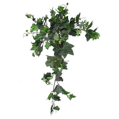 English Ivy Bush Hanging Plant