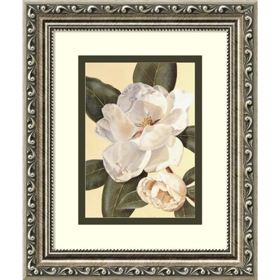 Morning Magnolia' Framed Painting Print
