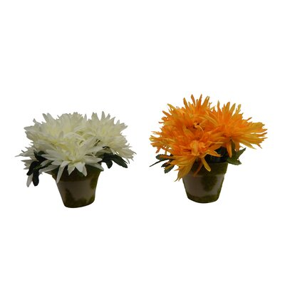 Mini Garden Mums Floral Arrangement