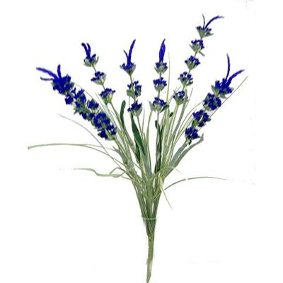 English Lavender Stem
