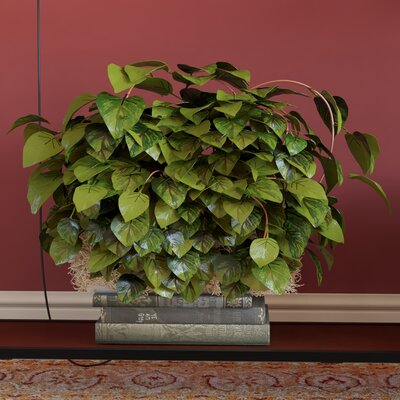 Pothos Ledge Desk Top Plant
