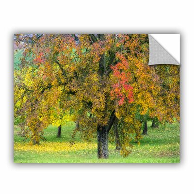 Autumn Tree Wall Decal Size: 14
