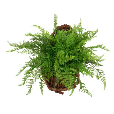 Fern Hanging Plant in Basket