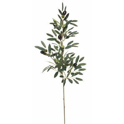 Olive Spray Foliage Plant
