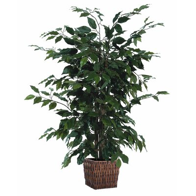 Artifical Ficus Tree in Planter