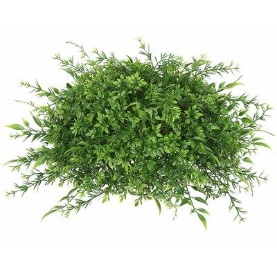 Mixed Greenery Half Ball Foliage Plant