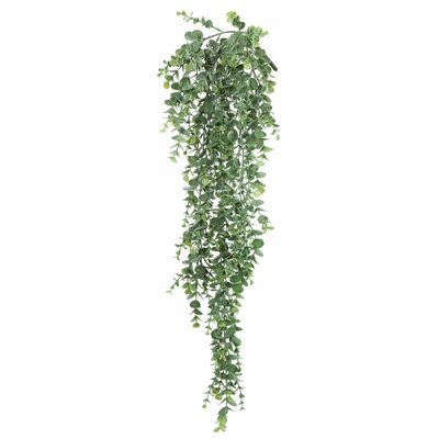 Hanging Mini Leaf Eucalyptus Bush Ivy Plant