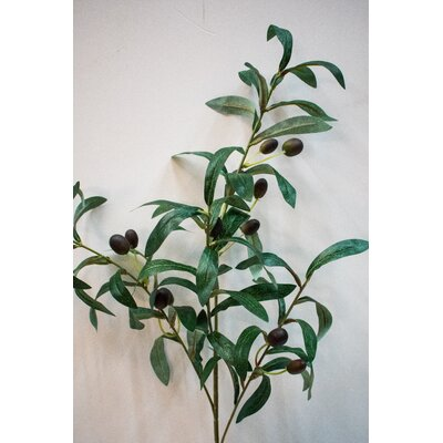Olive Spray Plant (Set of 12)