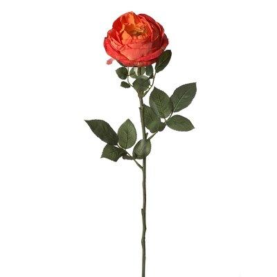 Petit Cabbage Rose Stem (Set of 12) Flower Color: Orange