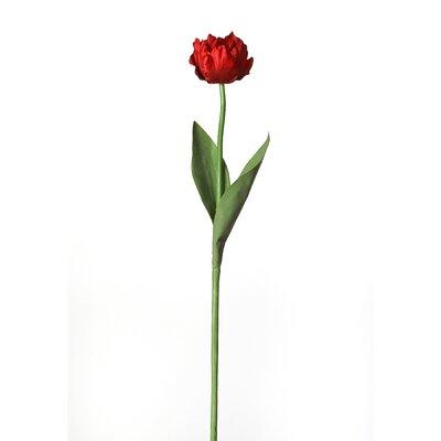 Parrot Tulip Stem (Set of 12) Flower Color: Red