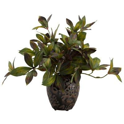 Peony Foliage Plant