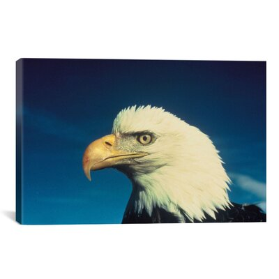 Bald Eagle Photographic Print on Canvas Size: 12