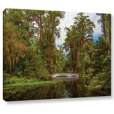 'The Cypress Garden' Photographic Print on Canvas Size: 14