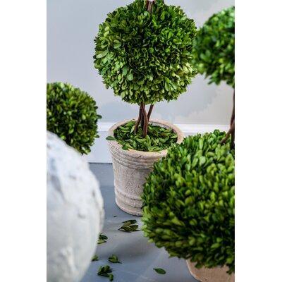 Floor Boxwood Topiary in Pot