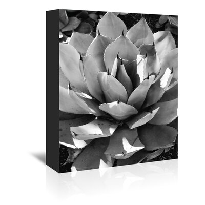 Beckett Cactus Photographic Print on Wrapped Canvas Size: 14