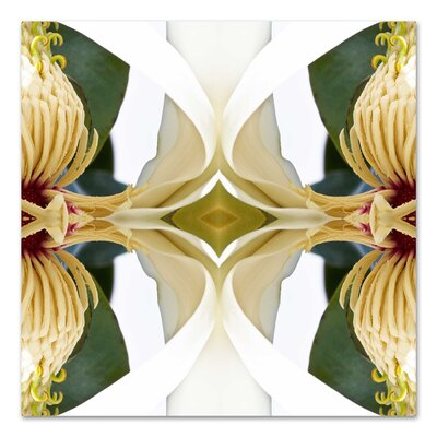 Baroque Magnolia 2 by Rose Anne Colavito Graphic Art