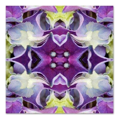 Hydrangea by Rose Anne Colavito Graphic Art Size: 18